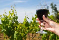 杯在葡萄行的酒  免版税库存照片