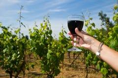 杯在葡萄行的酒  库存照片