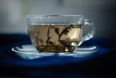 杯在蓝色背景的绿茶 库存照片