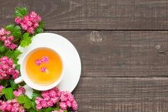 杯夏天与桃红色进展的分支的花茶 免版税库存图片