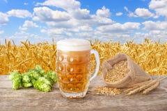 杯子反对领域的啤酒 免版税库存图片