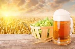 杯子反对麦田的啤酒 库存照片