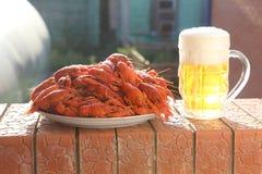 杯子啤酒和与煮沸的癌症的一个盘 库存图片