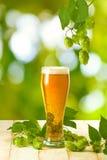 杯子用啤酒和蛇麻草在木桌上在绿色背景 免版税图库摄影