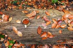 杯子用在秋叶的茶 库存照片