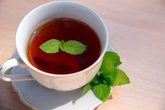 杯子造币厂的茶向量 免版税库存图片