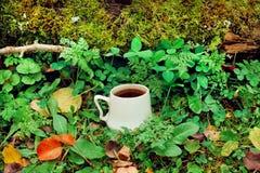 杯早晨咖啡在有青苔的绿色森林里在地面和叶子 库存照片
