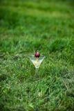 杯橙色热带鸡尾酒用樱桃 图库摄影