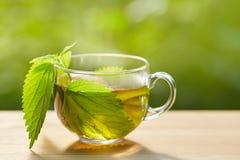 杯清凉茶用荨麻 图库摄影