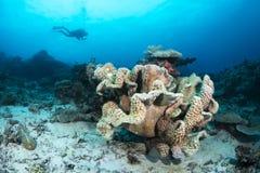 杯珊瑚礁 免版税库存照片