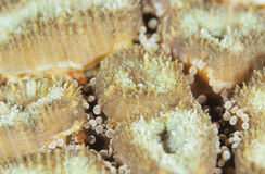 杯珊瑚 库存照片