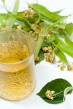 杯用菩提树茶和菩提树在白色同种疗法失眠补救概念开花 库存图片