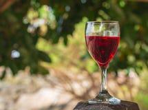 杯红葡萄酒在一张木桌被安置 在早晨se 库存照片