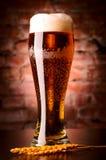杯贮藏啤酒 免版税库存照片
