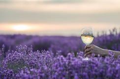 杯酒在手中在日落的淡紫色领域 图库摄影