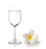 杯水和热带花赤素馨花 库存照片