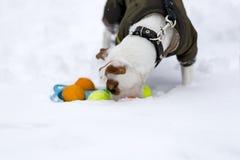 杰克使用与在街道上的一个球的罗素在冬天 免版税图库摄影