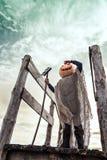 杰克灯笼用在他的站立反对天空的头的一个南瓜 库存图片