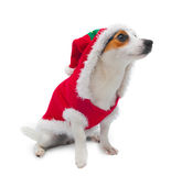 年轻杰克穿圣诞老人礼服的罗素 库存图片