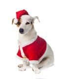 年轻杰克穿圣诞老人礼服的罗素 图库摄影