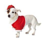 年轻杰克穿圣诞老人礼服的罗素 免版税库存照片