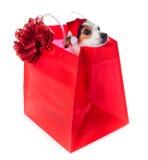 年轻杰克穿在红色购物袋的罗素圣诞老人礼服 免版税库存图片