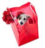 年轻杰克穿在红色购物袋的罗素圣诞老人礼服 库存照片
