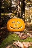 杰克O灯笼在被困扰的森林 免版税库存图片