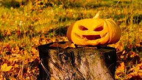 杰克o灯笼雕刻了在树桩的南瓜万圣夜 股票录像