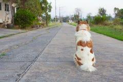 松劲的狗  免版税库存图片