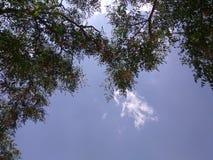 松弛天空和树 库存图片