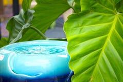 松弛热带庭院喷泉场面 库存图片