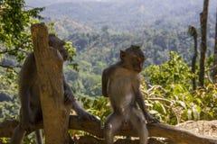 松弛猴子享受看法 库存图片