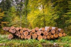 松木注册森林 免版税库存照片