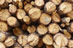 松木被堆积和被标记的树干部分 木材产业 库存图片