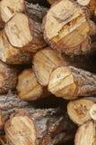 松木被堆积和被标记的树干部分 木材产业 图库摄影