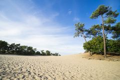 松树和沙子道路在国立公园Loonse和Drunense Duinen,荷兰 免版税库存图片