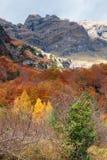 松树园谷在秋天 免版税库存图片