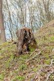 松树林业开发在一好日子 树桩和日志表示,过开发导致砍伐森林危及 库存照片