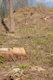 松树林业开发在一好日子 树桩和日志表示,过开发导致砍伐森林危及 免版税图库摄影