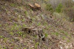 松树林业开发在一好日子 树桩和日志表示,过开发导致砍伐森林危及 免版税库存照片