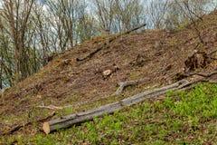 松树林业开发在一好日子 树桩和日志表示,过开发导致砍伐森林危及 图库摄影