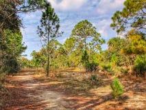 松树林木线佛罗里达足迹 免版税库存照片
