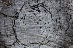 松树树干木头背景,老被风化的灰色颜色木树桩 图库摄影