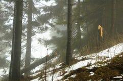 松树的森林 免版税库存照片