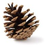 松树的锥体 免版税库存图片