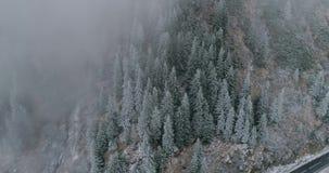 松树神秘的看法通过雾和降雪 在山的平安的片刻上流 显露射击 股票视频