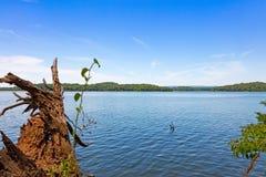 松树般茂盛的河浅滩梅格斯县 库存图片