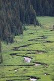 松树般茂盛的河 库存照片