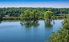 松树般茂盛的Z湖 免版税库存照片